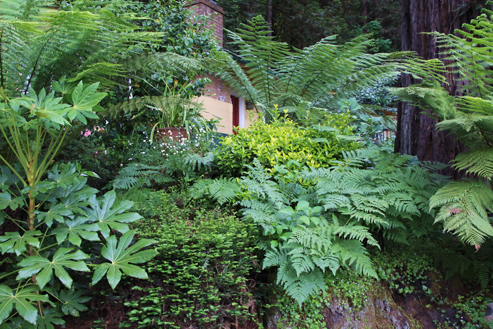 russian river lodging in redwood forest - fern grove cottages