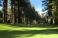 golf course in the redwoods